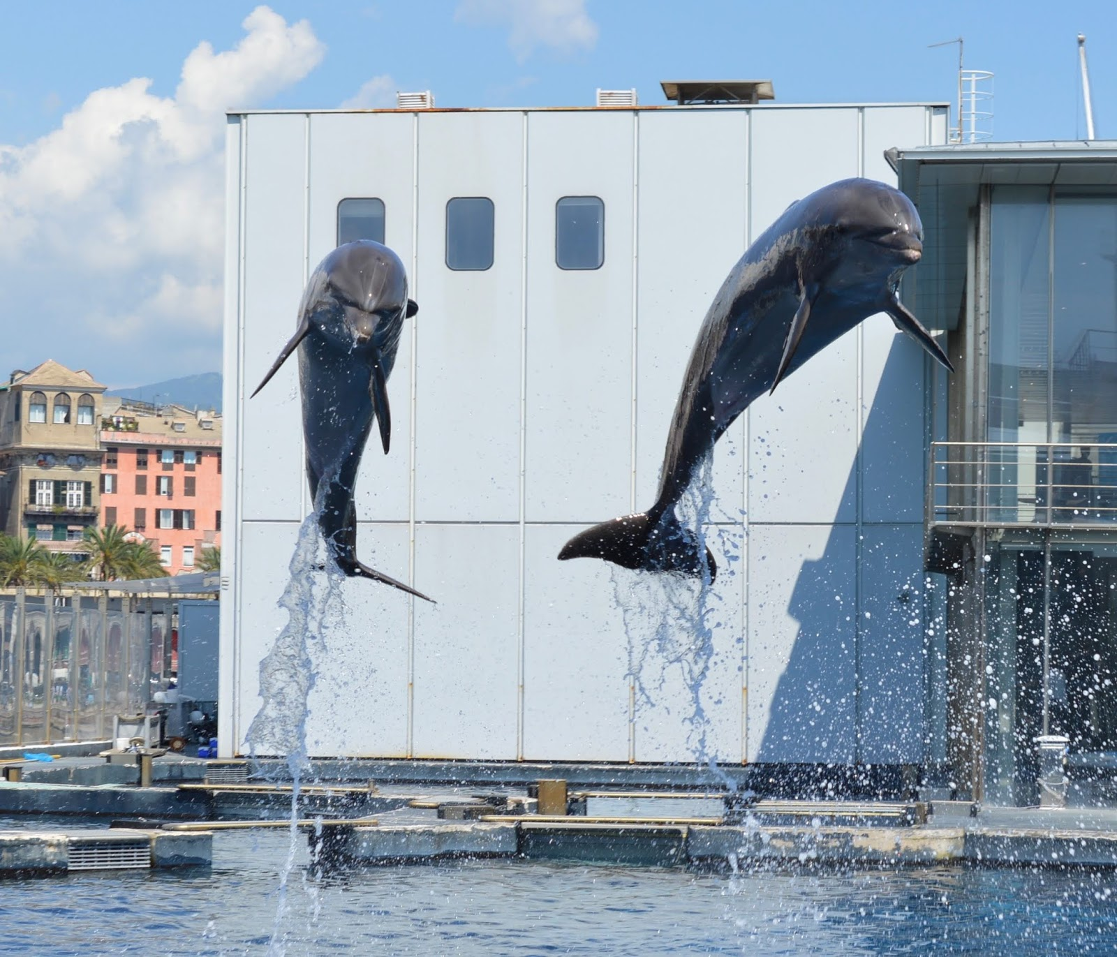 How to spend a weekend in Genoa with kids - Genoa aquarium behind the scenes tour - dolphins
