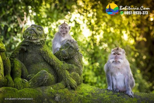 UBUD TOUR BALI, BALI TOUR UBUD, UBUD MONKEY FOREST, BALI TOUR DRIVER