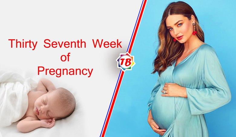 Thirty Seventh Week of Pregnancy