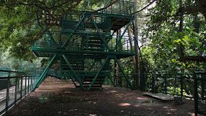 Forest Walk Babakan Siliwangi Bandung, Jawa Barat, Indonesia