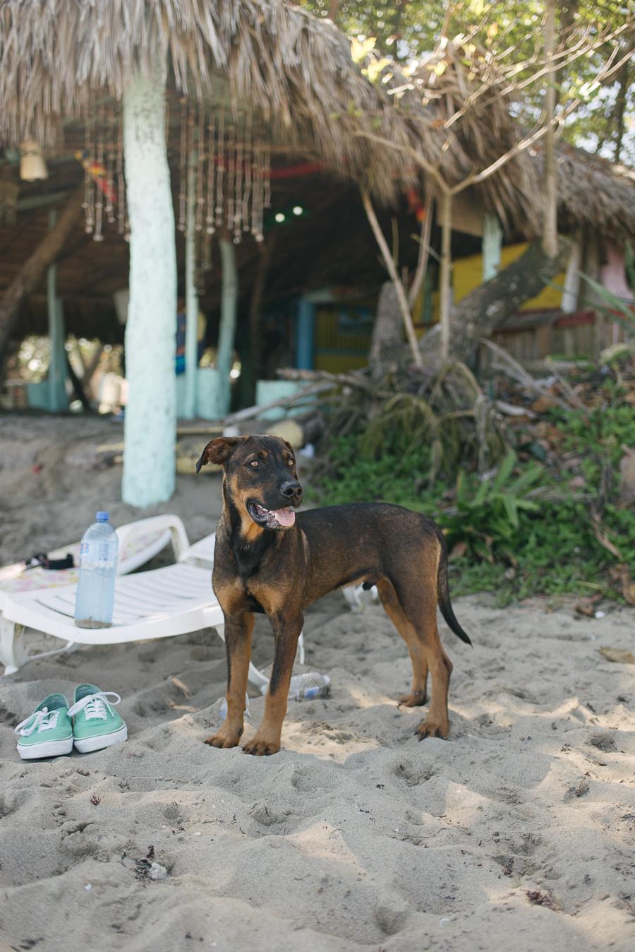 Alex Good-Beautyosaurus Lex-Dominican Republic-travel guide-Punta Cana-Beach-Holiday-Vacation-lifestyle blog-Playa Encuentro