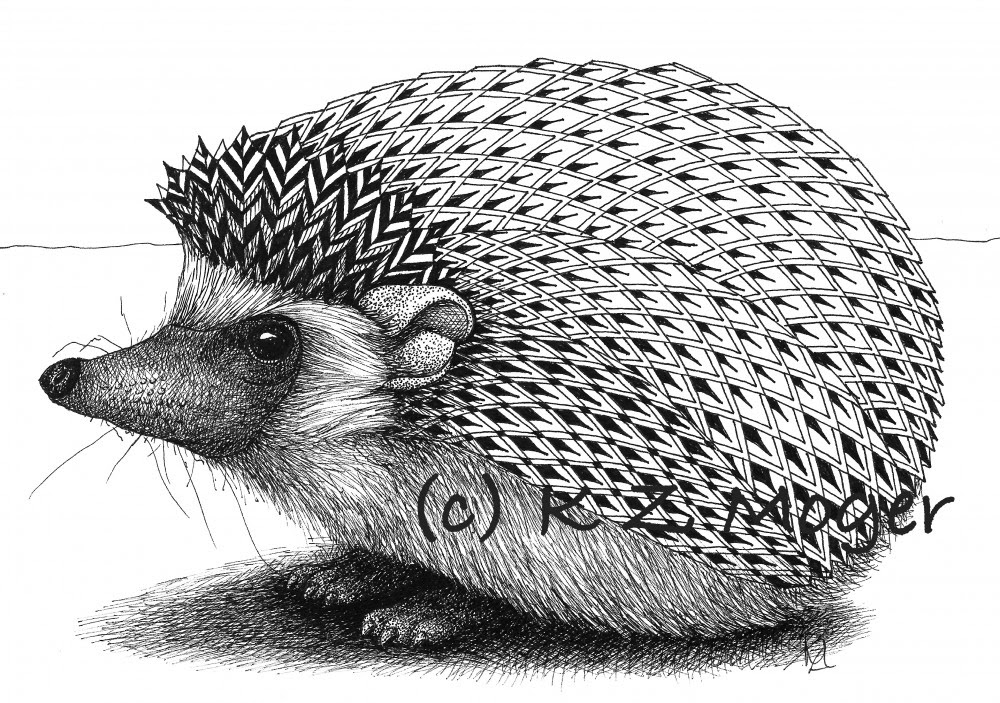 05-Hedgehog-Kristin-Moger-Animal-Portraits-Dressed-with-Zentangle-Textures-www-designstack-co