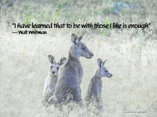 'I have learned to be with those I like is enough' - Walt Whitman