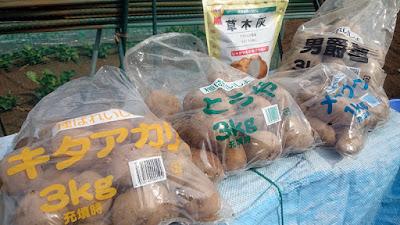 購入した種ジャガイモと草木灰