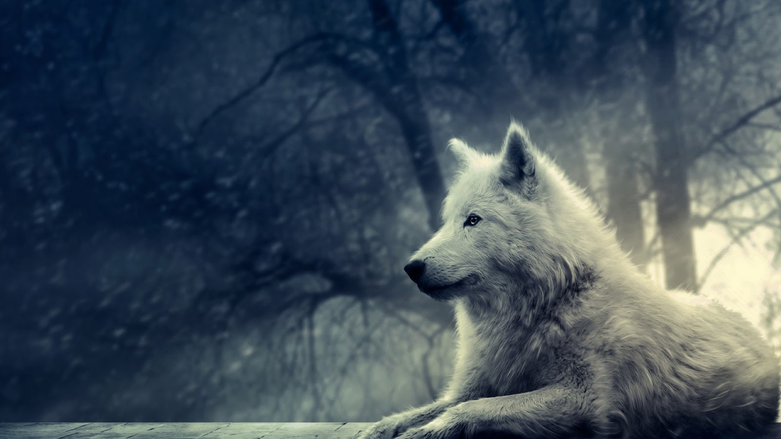 Beautiful Wolf in the Winter Forest Wallpaper