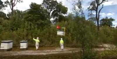 Μεταφορά μελισσιών με ελικόπτερο video