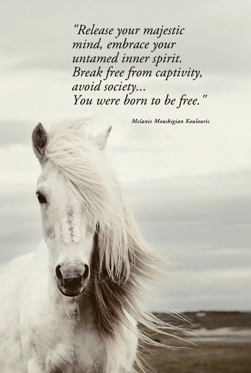Positive & Inspirational Quotes: You were born free.