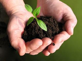 Bagi Bibit Pohon Untuk Pemudik