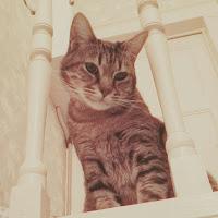 mogu le chat