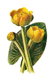 flower image download wildflower clip art