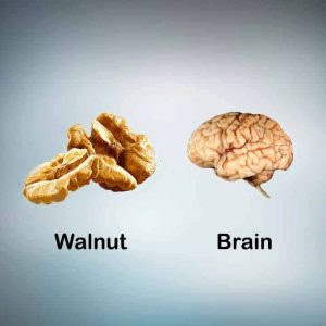 walnu-for-brain