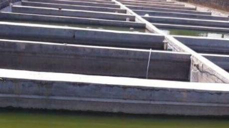 Download 610 Gambar Ikan Nila Dan Lele Terpopuler