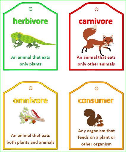 Dinosaur Herbivore Carnivore Sorting Activity