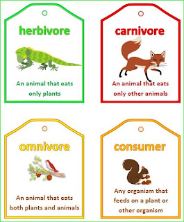 Nyla's Crafty Teaching: Food Chain and Food Web Vocabulary Words ...