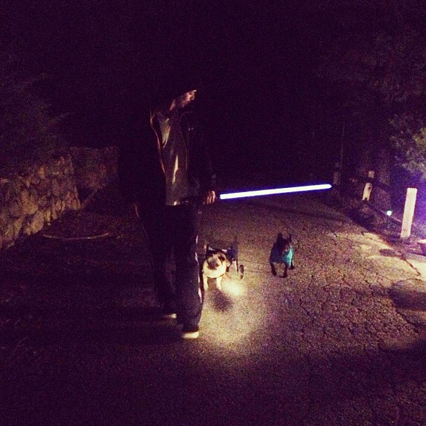 walking the dogs in the dark with a light saber