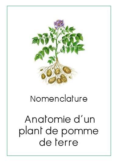 montessori anonymes nomenclature anatomie d 39 un plant de pomme de terre. Black Bedroom Furniture Sets. Home Design Ideas