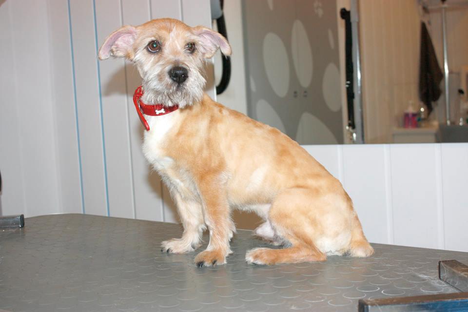 strzyżenie psów w salonie fryzjerskim Gdynia