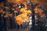 autumn colours leaves