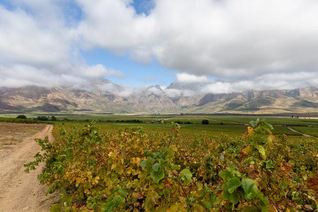 Vineyards at Opstal Estate