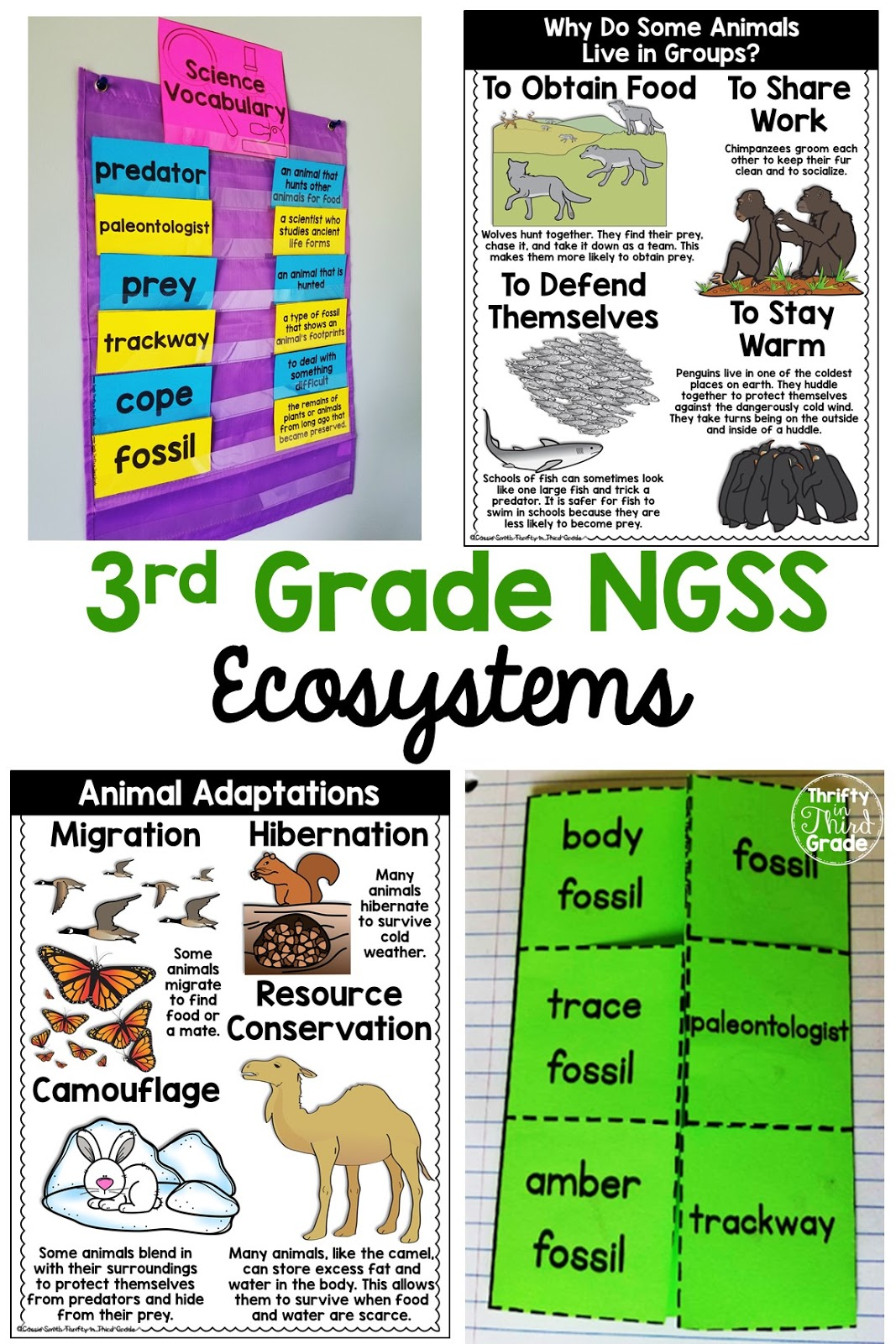 Interdependent Relationships in Ecosystems 3rd Grade NGSS