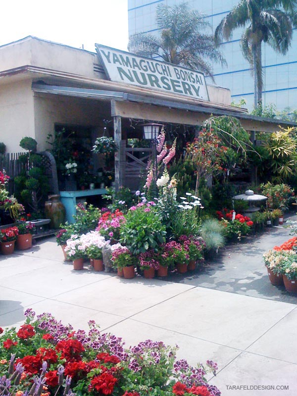 Elished By George Yamaguchi In 1949 Bonsai Nursery Was First Located On Sawtelle Blvd And Olympic Later 1965 The Moved