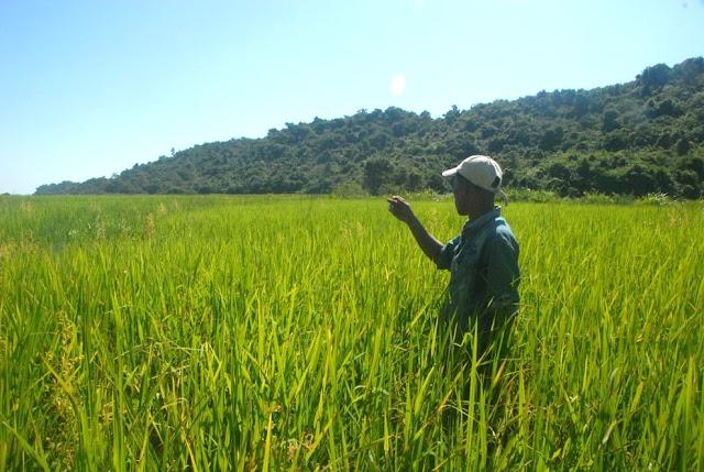 ေအာင္ၿငိမ္းခ်မ္း (Myanmar Now) ● နည္းပညာသစ္ႏွင့္ ထိေတြ႔လာေသာ ရခုိင္ေဒသလယ္သမားမ်ား