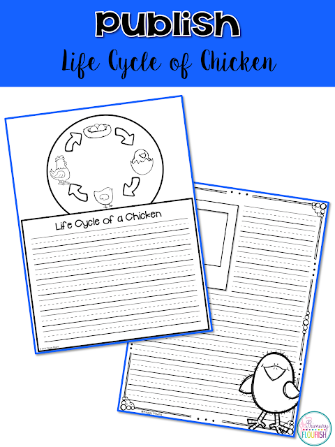 Are you looking for a way to fit science into your day?  This free pack has everything you need to lead your students through the writing process as they learn about chickens.