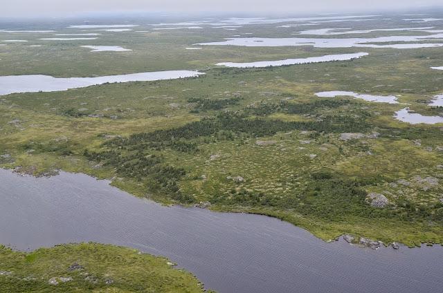 NASA studies details of a greening Arctic