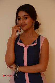 Actress Anu Emmanuel Pictures in Long Dress at Majnu Audio Success Meet 0010