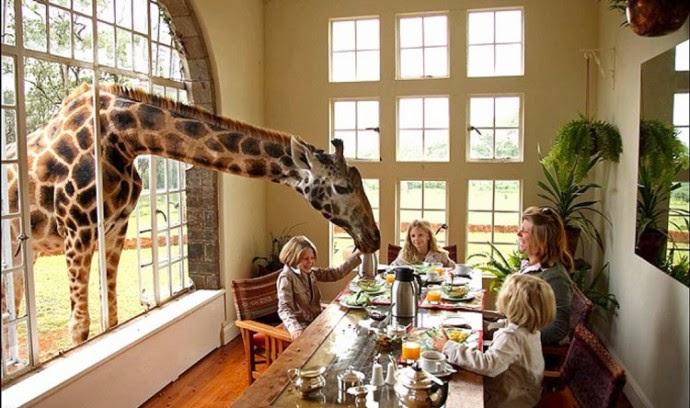 kolayyolculuk-giraffe-manor