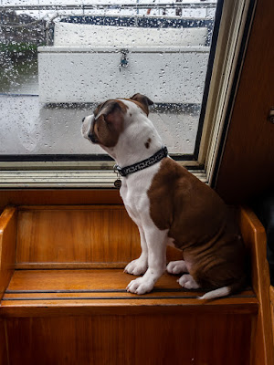 Photo of Ruby sitting on the top step watching the rain