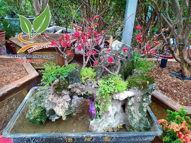 Hoa mộc lan, trang trí cho sân vườn trang nhã. C5efae7717faf4a4adeb