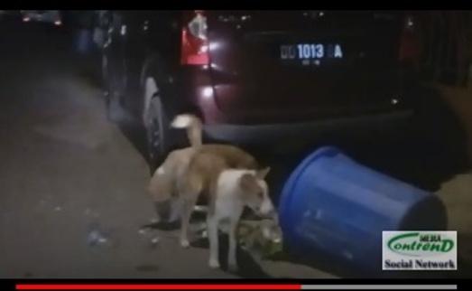 Sampah Kerap Tertumpah Ke Jalanan, Ternyata Anjing, Biangnya
