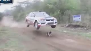 Το πιο τυχερό σκυλί του κόσμου! [video]