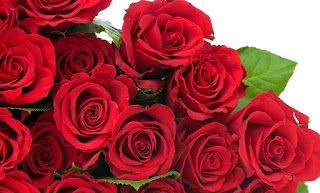 rose_day_images_download