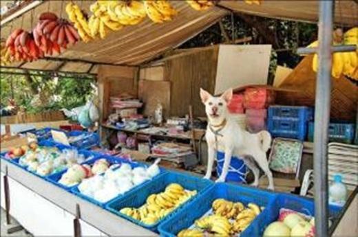 Chú chó giúp chủ bán hàng suốt 3 năm