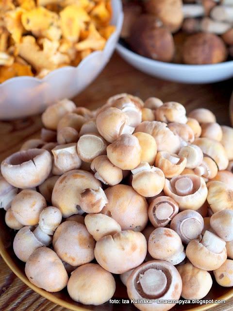 grzyby, grzybobranie, plachetka kolpakowata, przetwory, leczo z grzybami, salatka z grzybami, grzyby z warzywami, grzyby w pomidorach