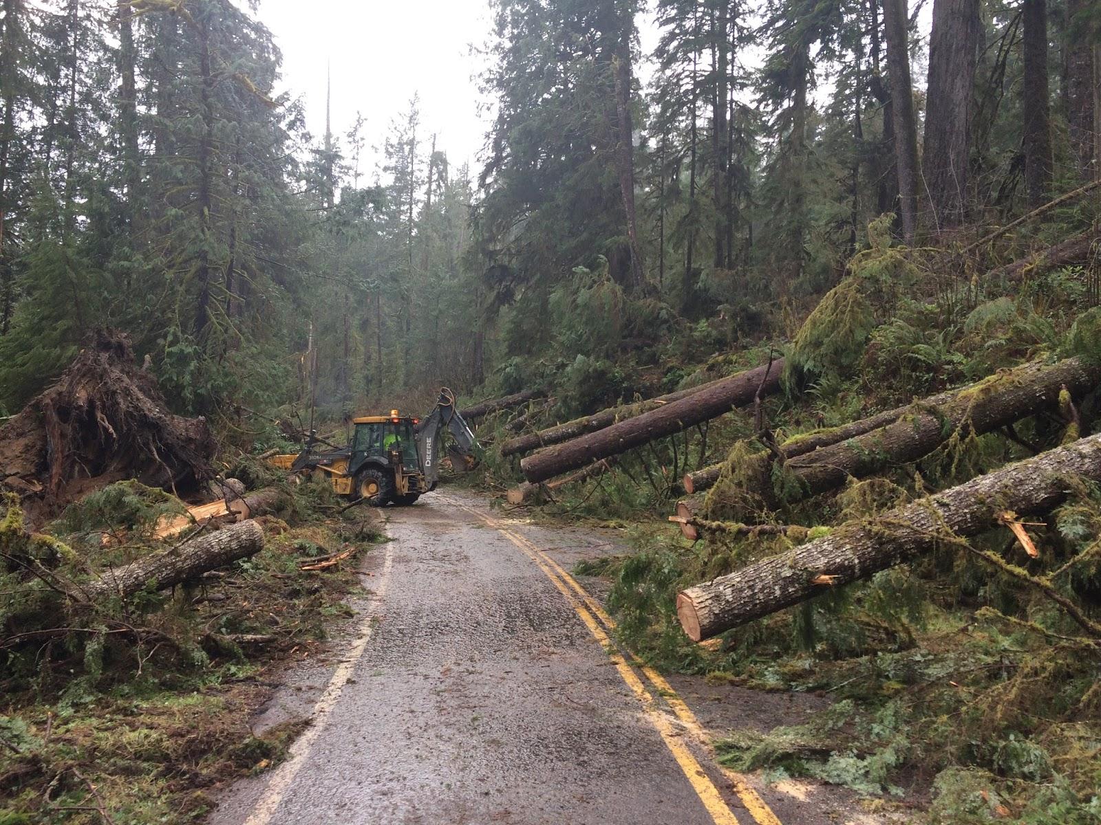 Что переломало 100 вековых деревьев в лесу американского штата Вашингтон? (15 фото)