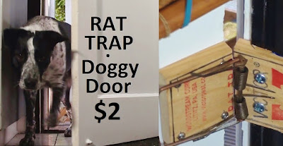 Split screen of dog entering door and rat trap closing it