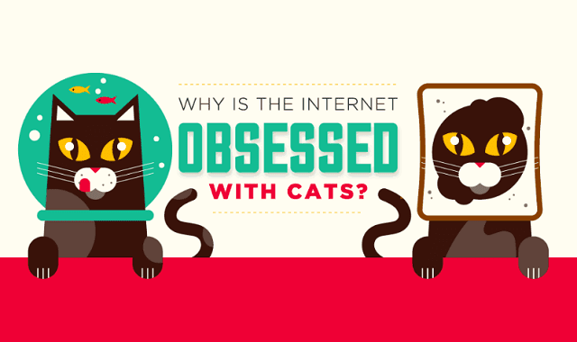 Why The Internet Is So Obsessed With Cats