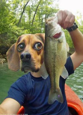 Lustige Angelbilder Fisch gefangen Picdump
