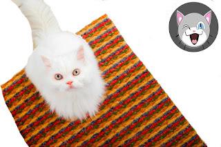 تبول القطط في أرجاء البيت، الأسباب وطرق العلاج