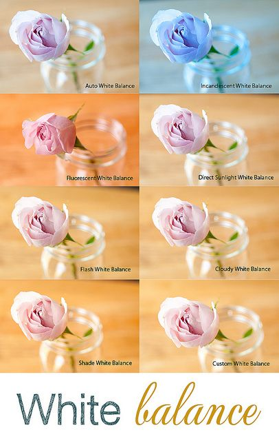 Balans Bieli; BB; Wb; White balance; photography; pinterest; rose; flower; kwiat; róża