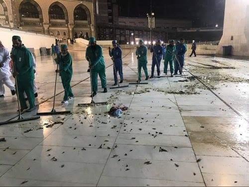 Jutaan Serangga di Sekitar Masjidil Haram, Pertanda Apakah?
