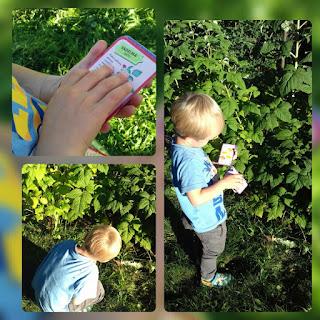 vadelma lapsi poika pensas