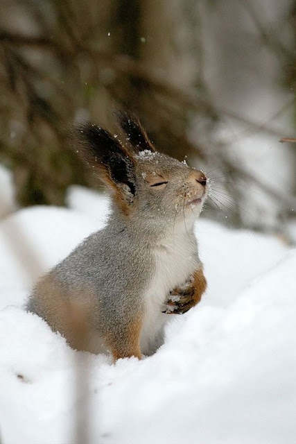 Beautiful winter scene with cute squirrel in snow