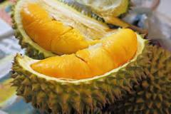 Kandungan Gizi dan Manfaat Buah Durian