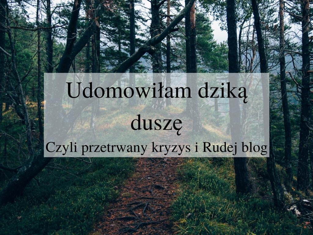 Idąc przez las, kryzys, przemyślenia o blogowaniu, zasady są po to, by je łamać, typewriterka