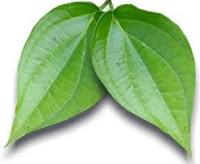 manfaat dan khasiat daun sirih