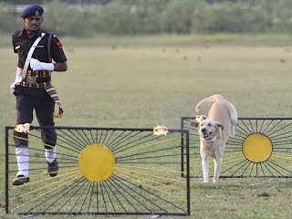 police trained dogs
